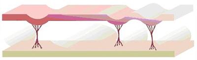 carbossiterapia_italiana-cdt evolution001